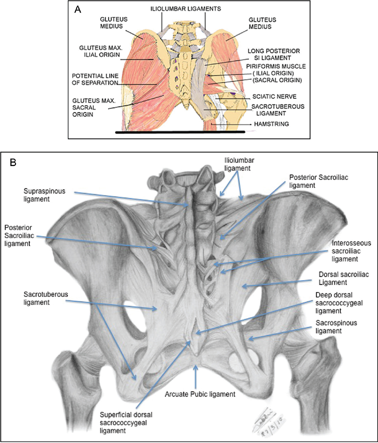 Sacroiliac Joint A Review Tilvawala K Kothari K Patel R Indian